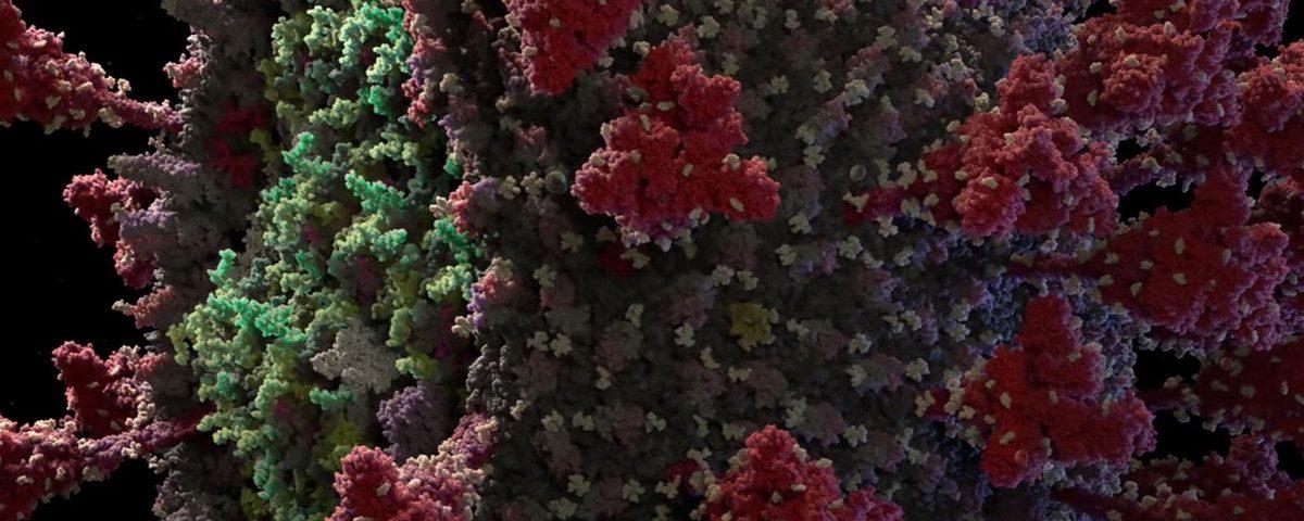 O modelo mais preciso de coronavírus 3D até o momento é criado; Assista vídeo
