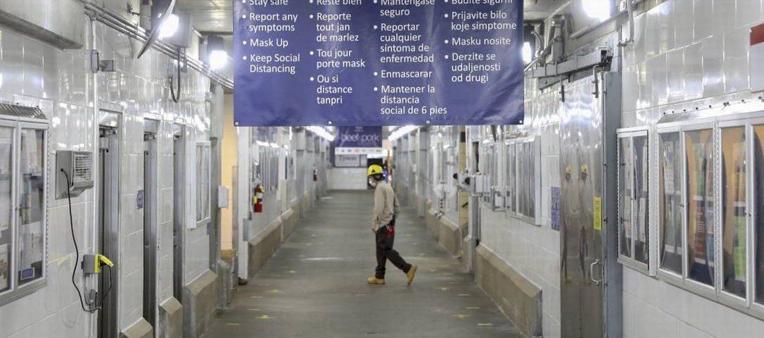 Nos Estados Unidos, os latinos com Covid-19 são pressionados a trabalhar na indústria de carne.