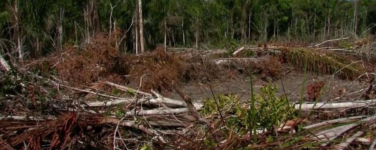 Ricardo Salles revoga ato que permitiu cancelar infrações ambientais e regularizar invasões na Mata Atlântica